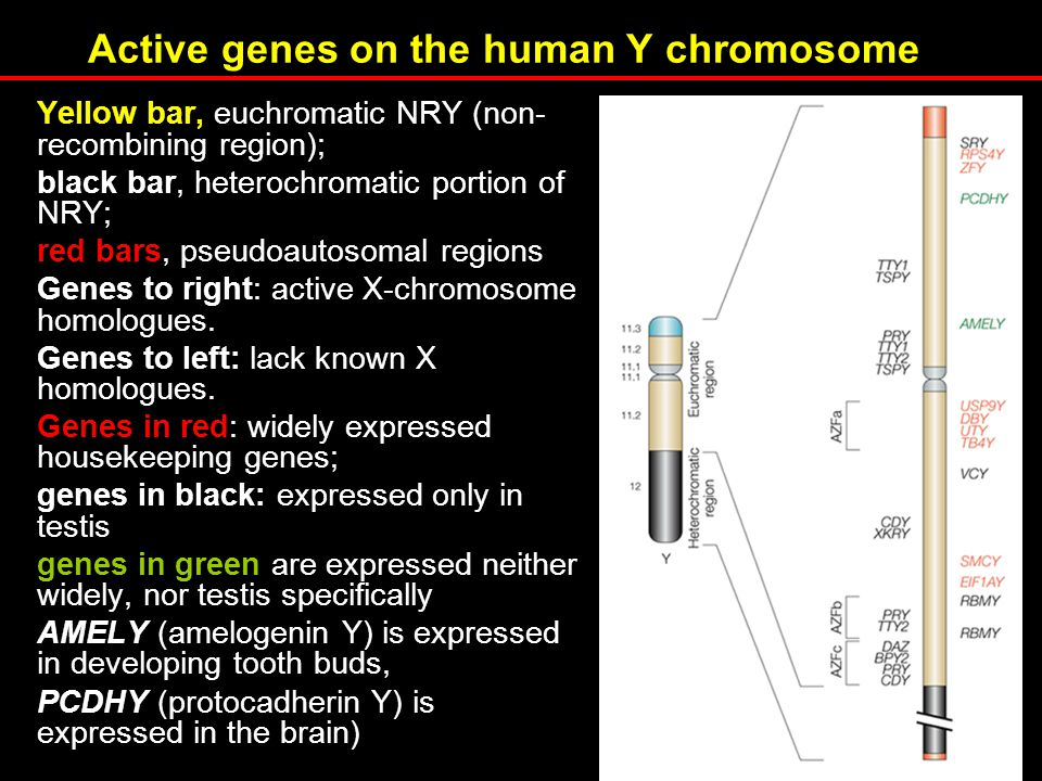 Active genes on the human Y chromosome