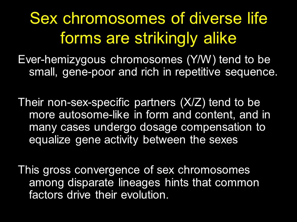 Sex chromosomes of diverse life forms are strikingly alike