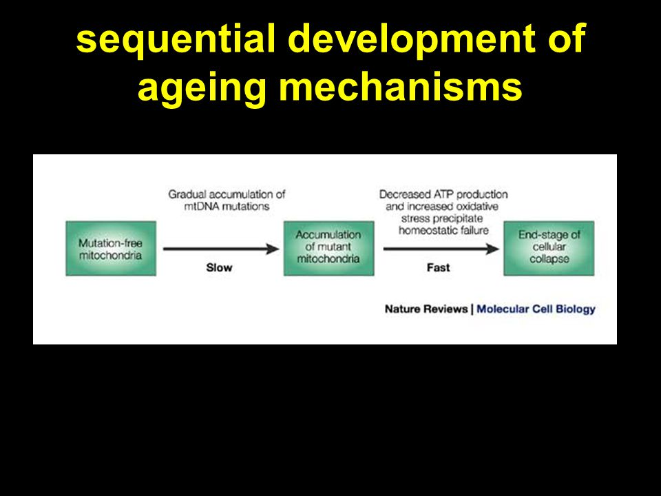 sequential development of ageing mechanisms