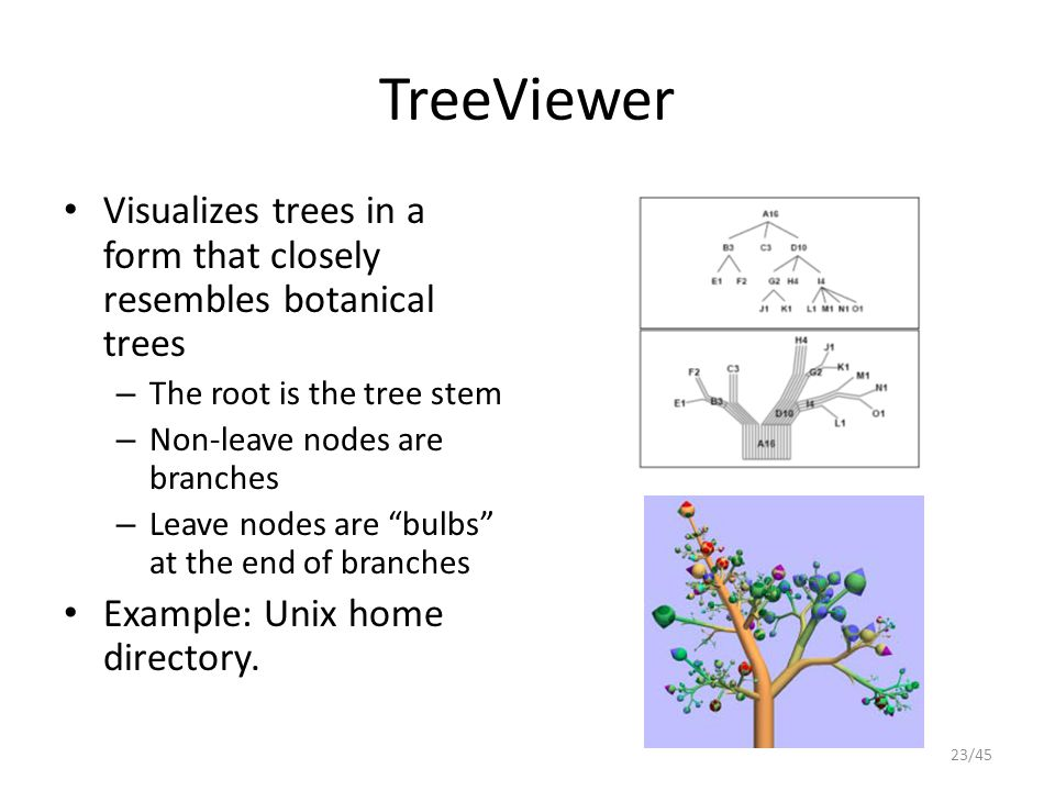 TreeViewer Visualizes trees in a form that closely resembles botanical trees. The root is the tree stem.