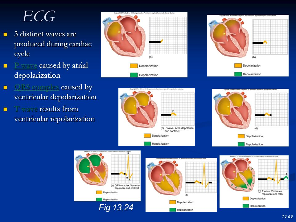 ECG 3 distinct waves are produced during cardiac cycle