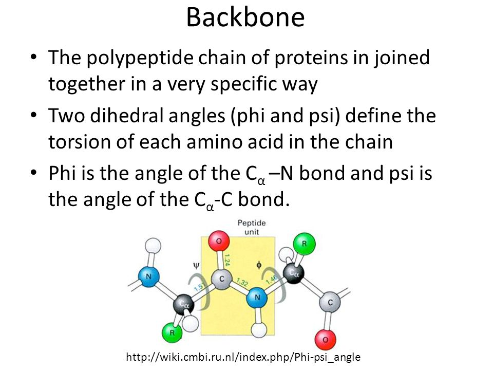 Backbone The polypeptide chain of proteins in joined together in a very specific way.