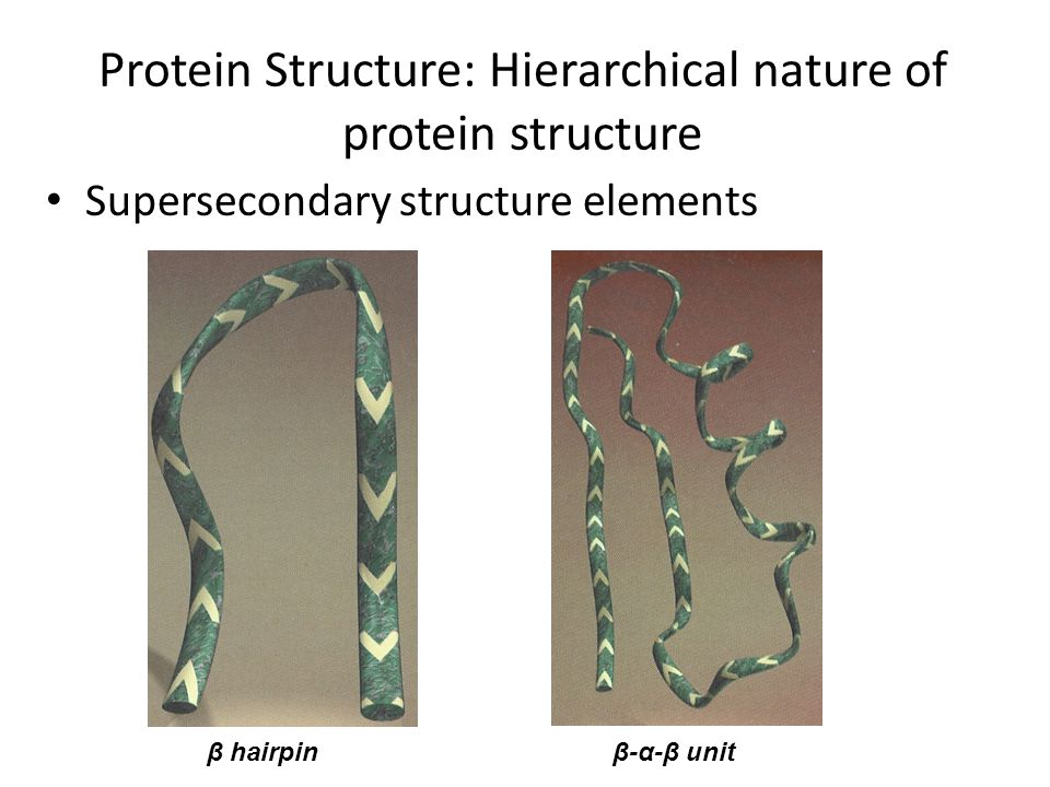 Protein Structure: Hierarchical nature of protein structure
