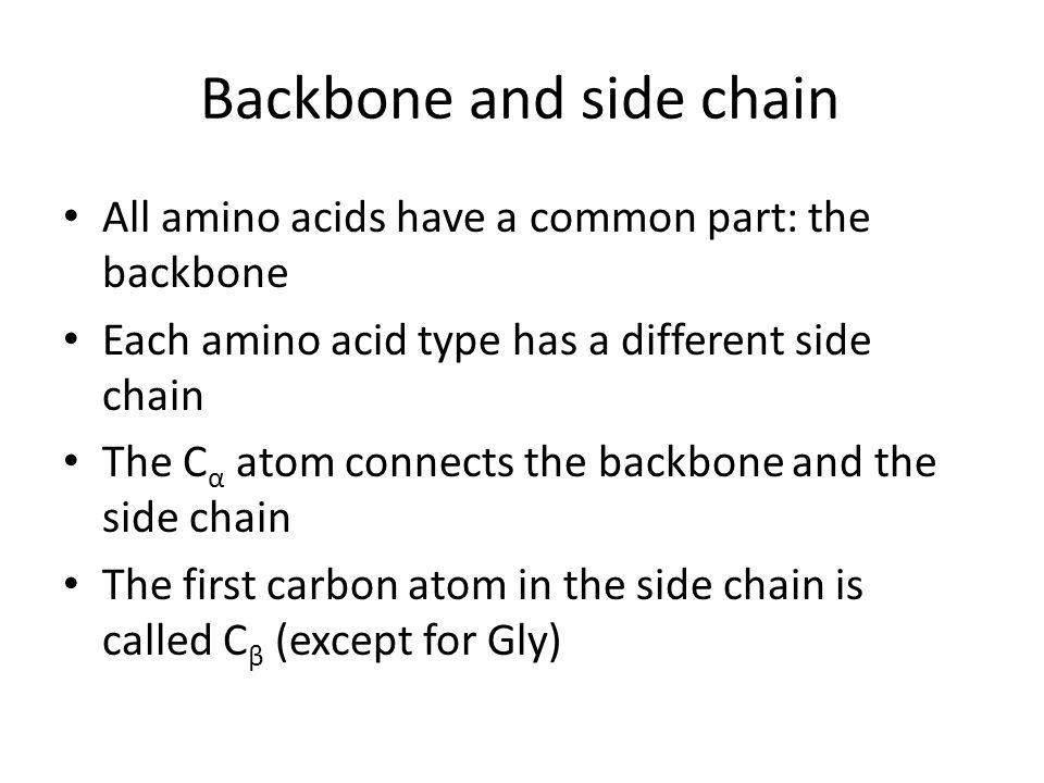 Backbone and side chain