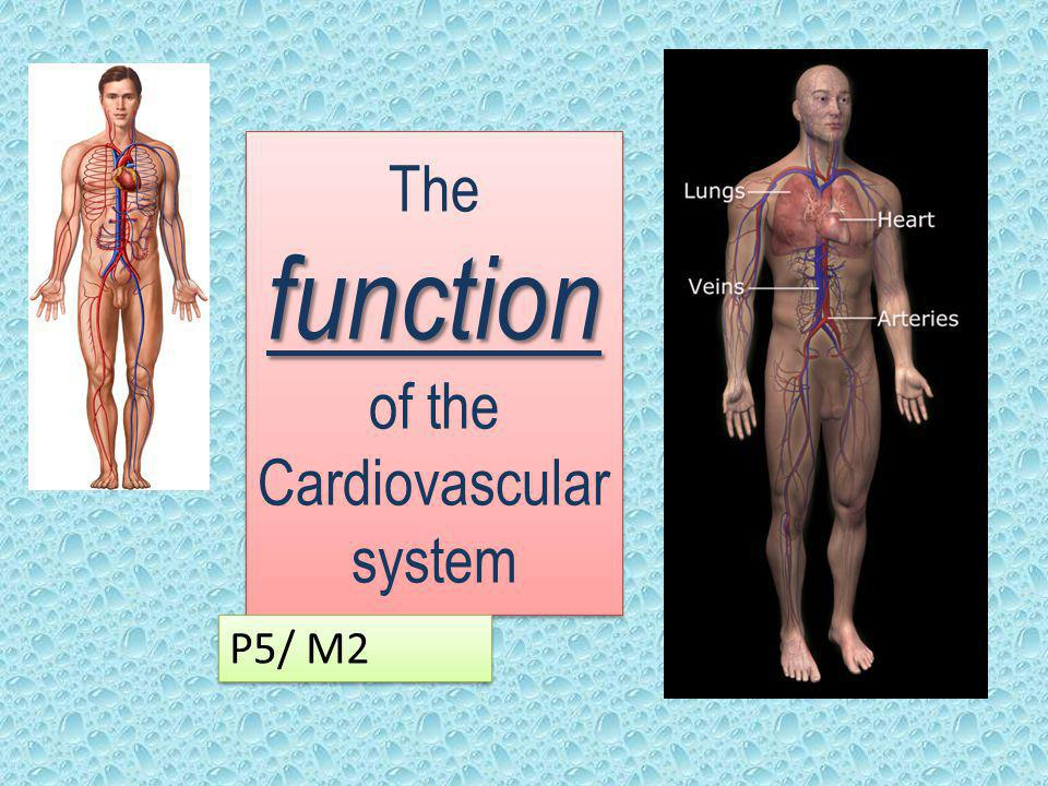 The function of the Cardiovascular system