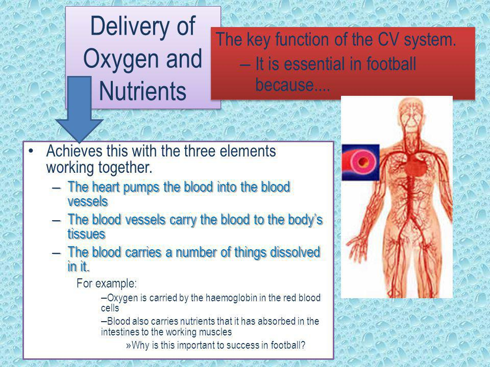 Delivery of Oxygen and Nutrients