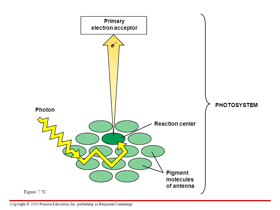 Primary electron acceptor