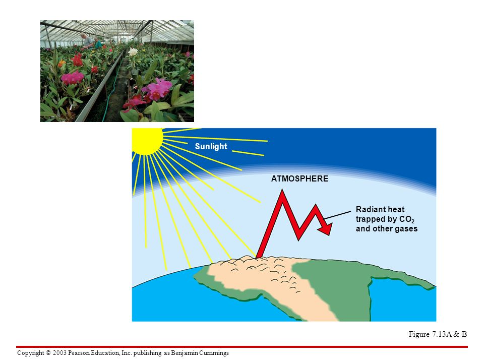 Sunlight ATMOSPHERE Radiant heat trapped by CO2 and other gases Figure 7.13A & B
