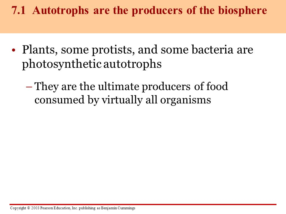 7.1 Autotrophs are the producers of the biosphere