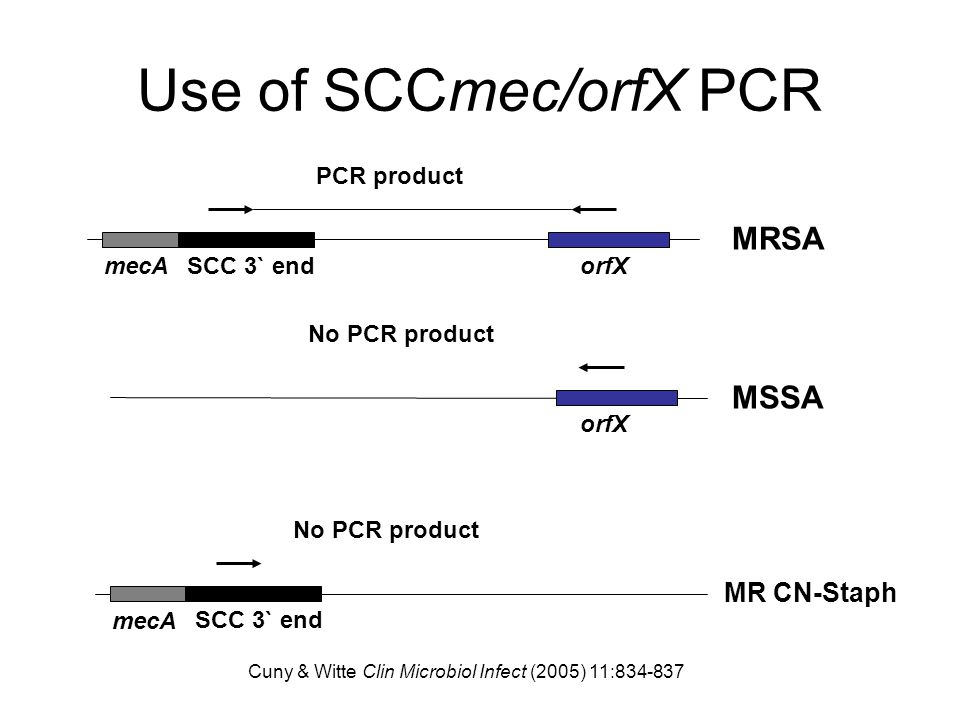 Use of SCCmec/orfX PCR MRSA MSSA MR CN-Staph PCR product mecA