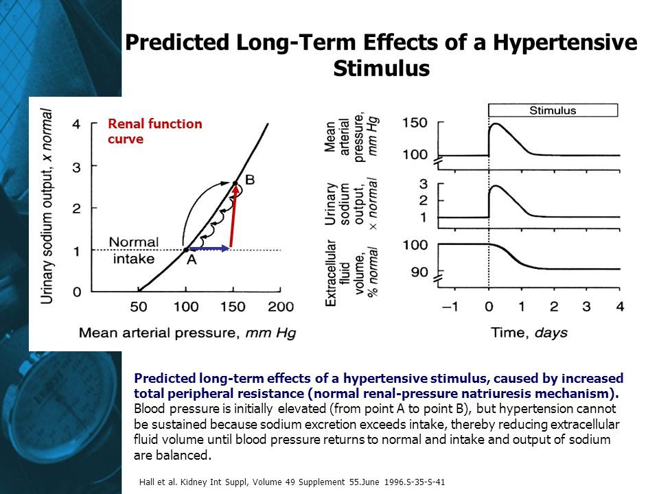 Predicted Long-Term Effects of a Hypertensive Stimulus