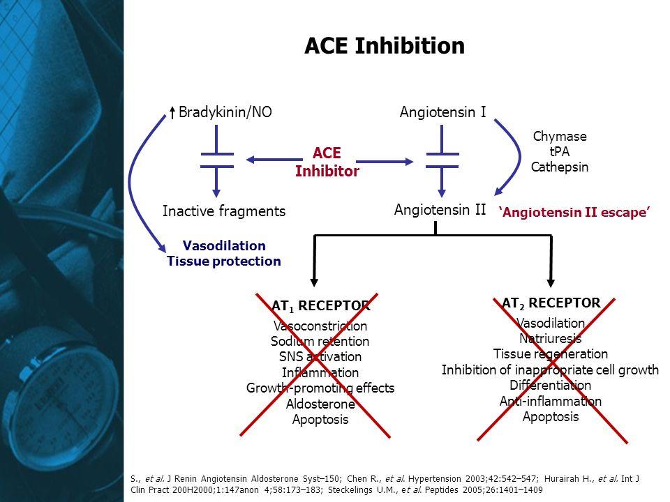 ACE Inhibition Bradykinin/NO Angiotensin I ACE Inhibitor