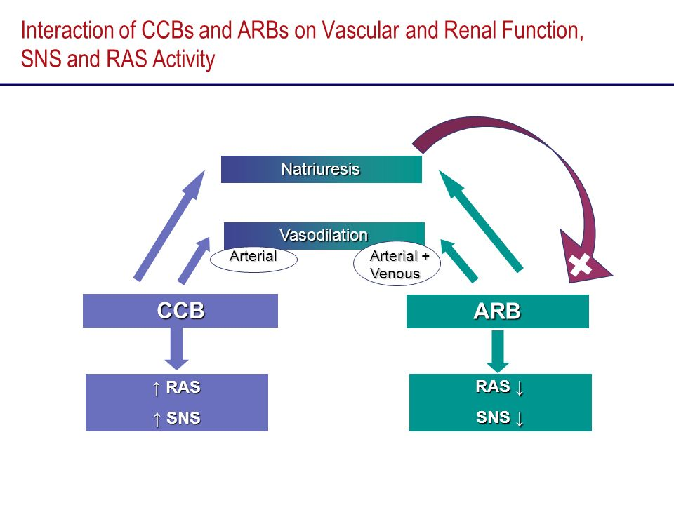 Interaction of CCBs and ARBs on Vascular and Renal Function, SNS and RAS Activity