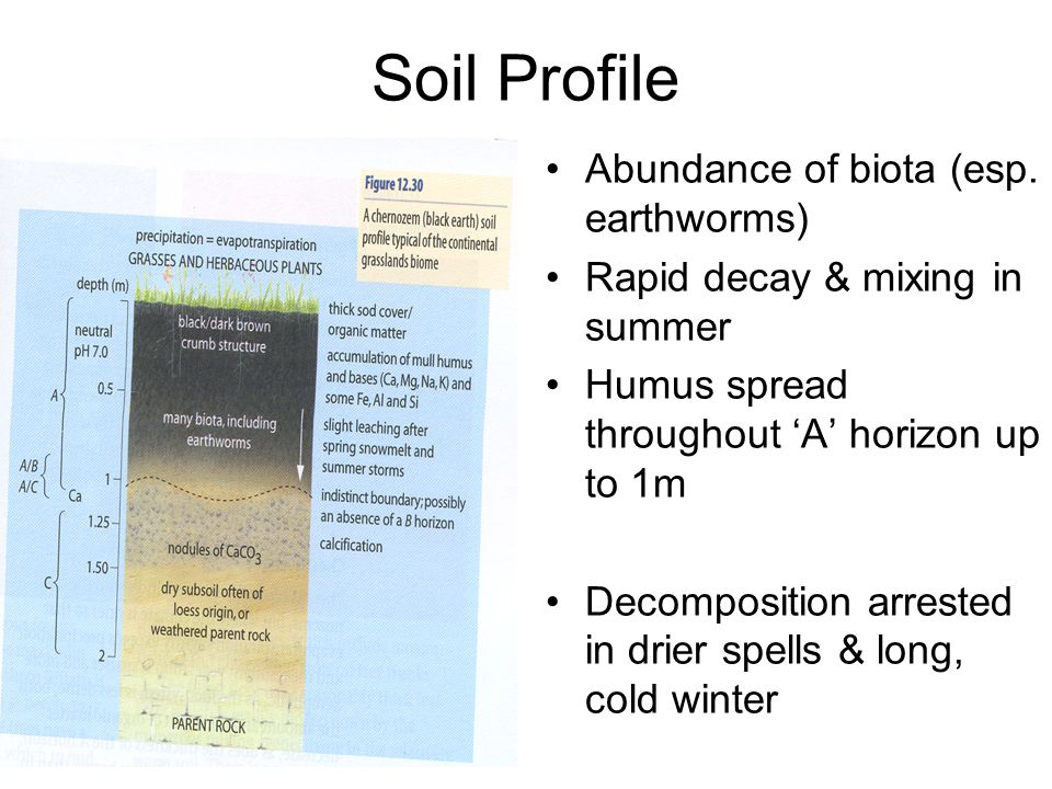 Soil Profile Abundance of biota (esp. earthworms)