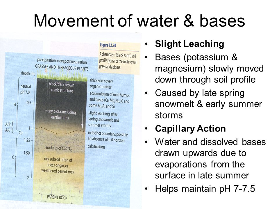 Movement of water & bases