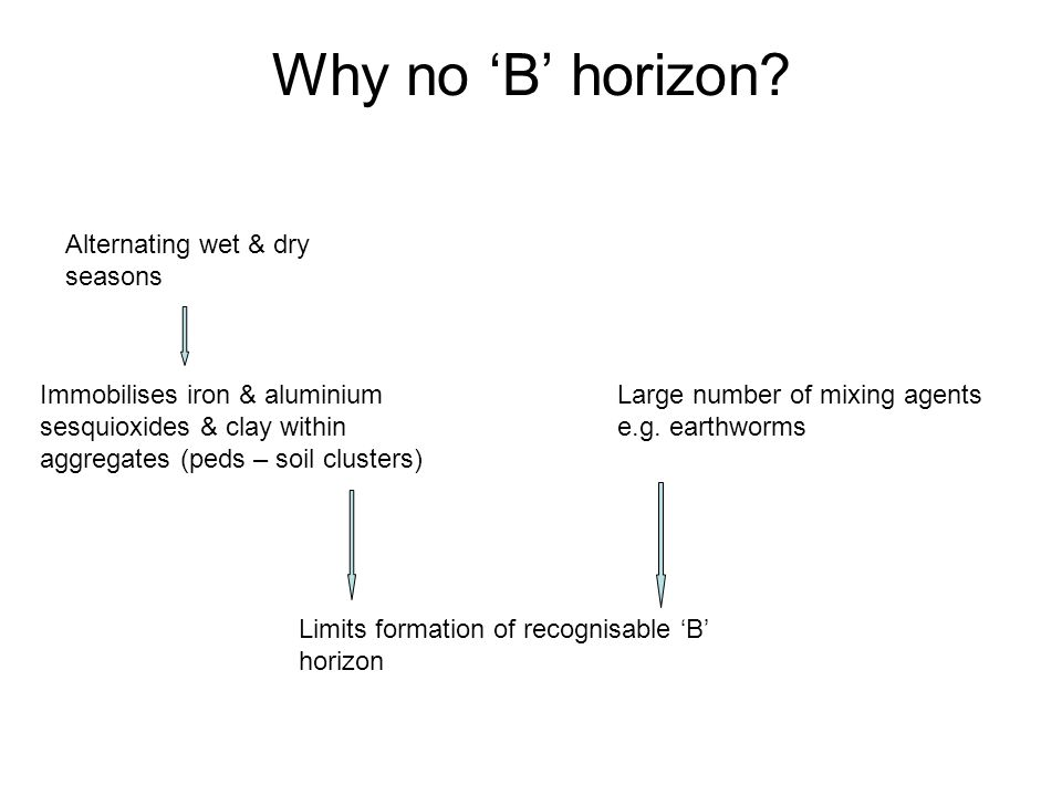Why no 'B' horizon Alternating wet & dry seasons