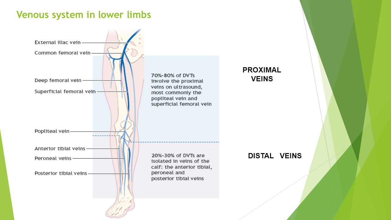 Venous system in lower limbs