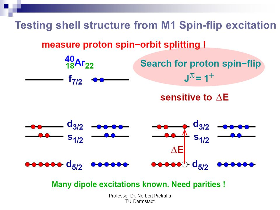 Testing shell structure from M1 Spin-flip excitation