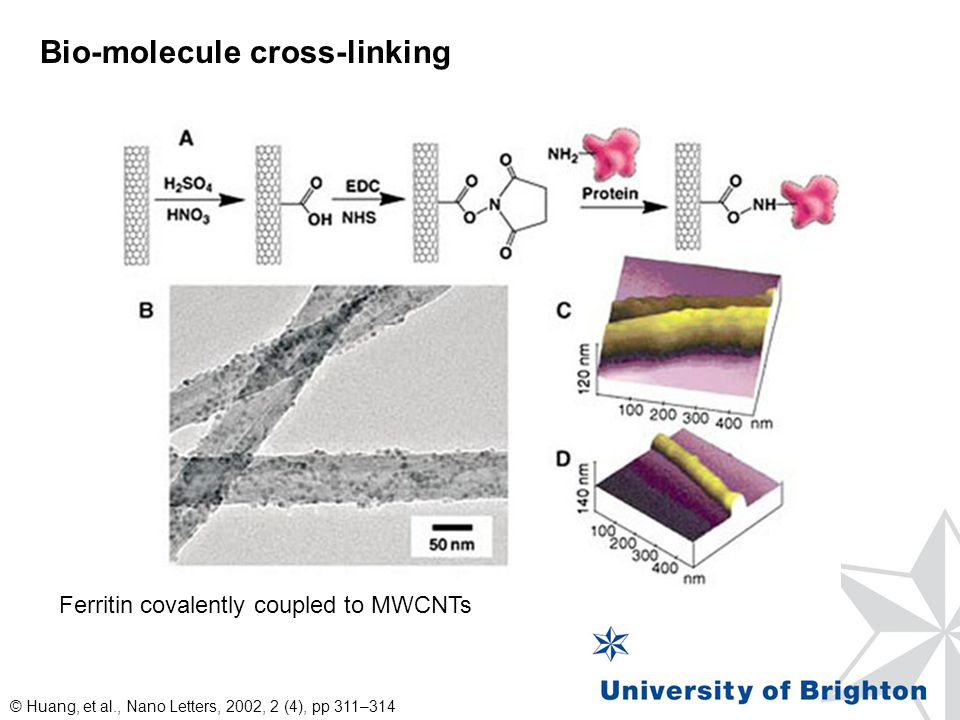 Bio-molecule cross-linking