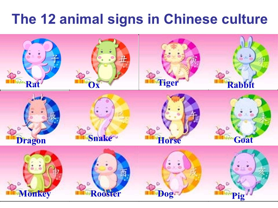 The 12 animal signs in Chinese culture
