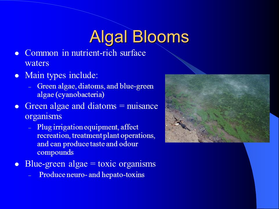 Algal Blooms Common in nutrient-rich surface waters