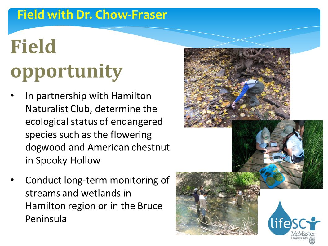 Field opportunity Field with Dr. Chow-Fraser