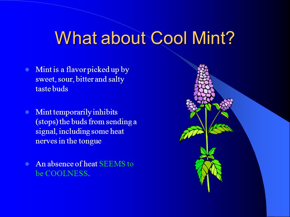 What about Cool Mint Mint is a flavor picked up by sweet, sour, bitter and salty taste buds.