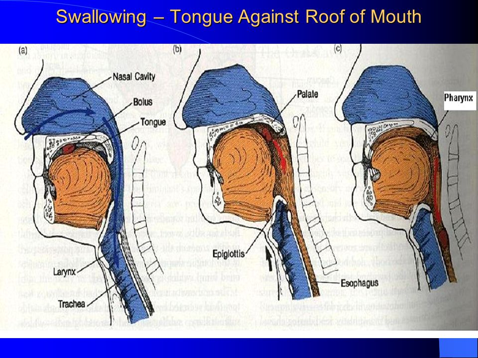 Swallowing – Tongue Against Roof of Mouth