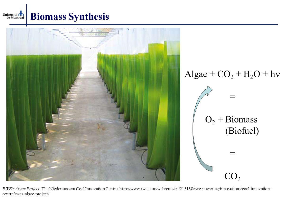 Biomass Synthesis Algae + CO2 + H2O + hn = O2 + Biomass (Biofuel) CO2