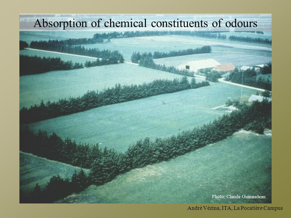 Absorption of chemical constituents of odours