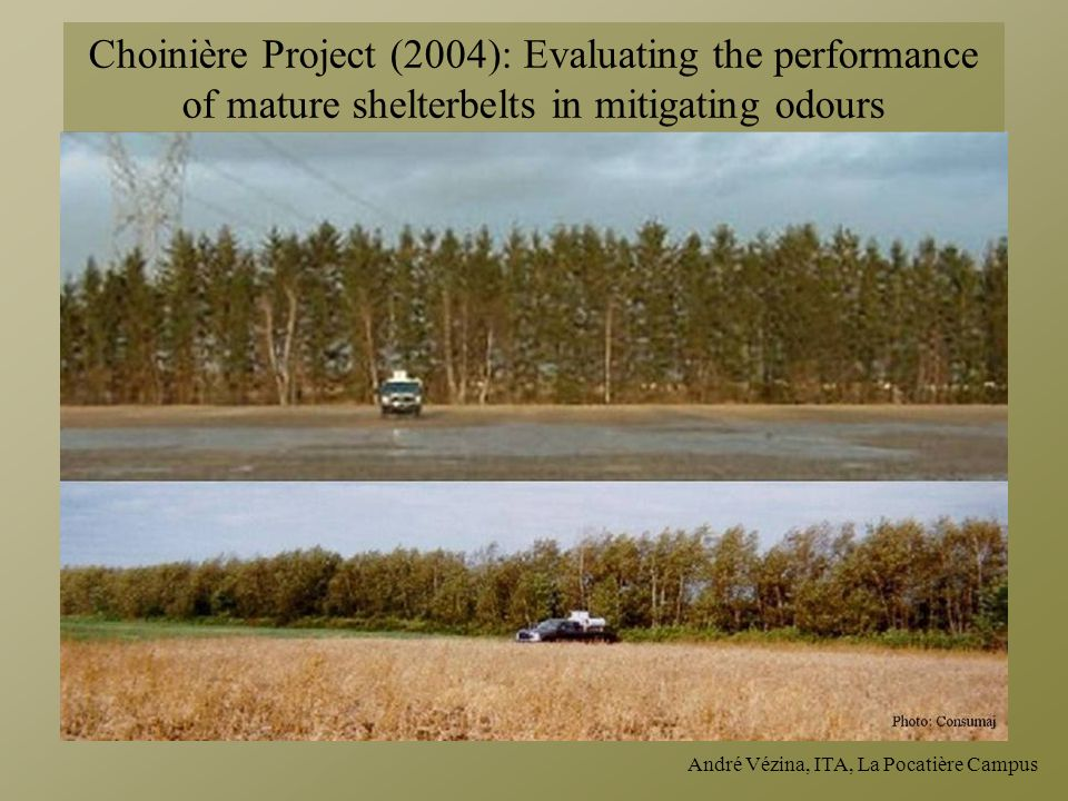 Choinière Project (2004): Evaluating the performance of mature shelterbelts in mitigating odours