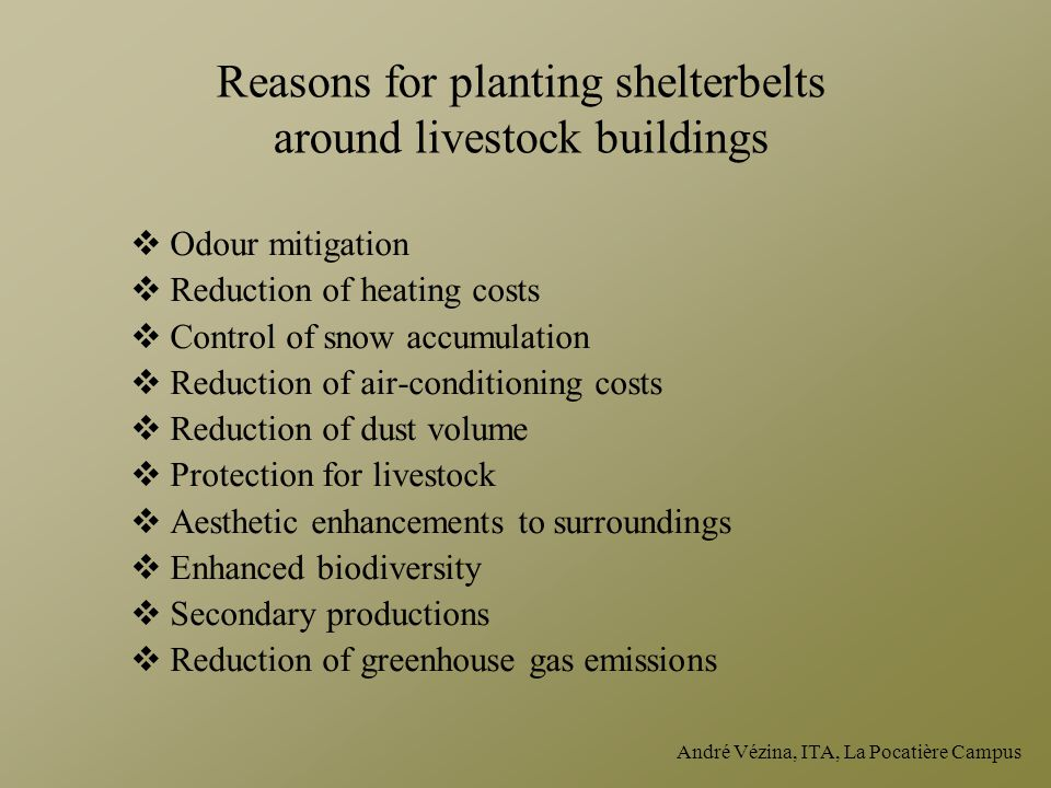 Reasons for planting shelterbelts around livestock buildings