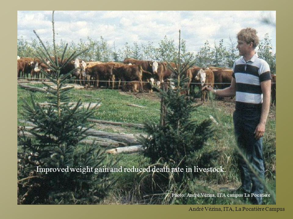 Improved weight gain and reduced death rate in livestock.