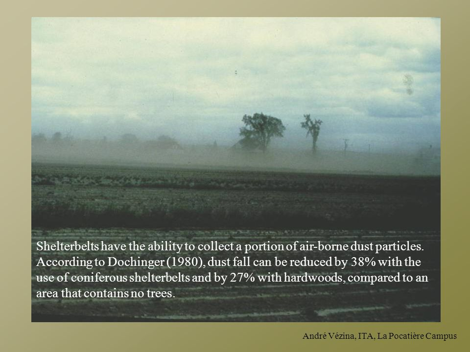 Shelterbelts have the ability to collect a portion of air-borne dust particles. According to Dochinger (1980), dust fall can be reduced by 38% with the use of coniferous shelterbelts and by 27% with hardwoods, compared to an area that contains no trees.