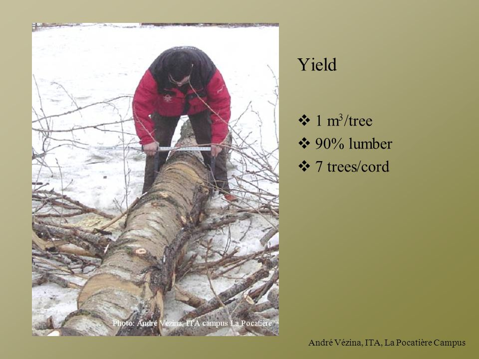 Yield 1 m3/tree 90% lumber 7 trees/cord