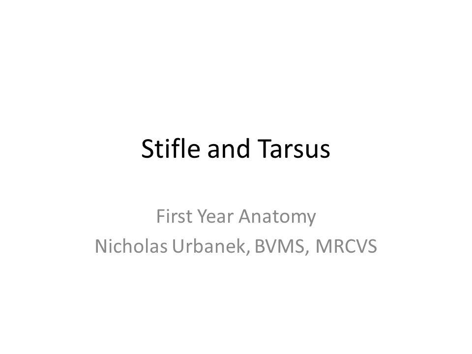 First Year Anatomy Nicholas Urbanek, BVMS, MRCVS