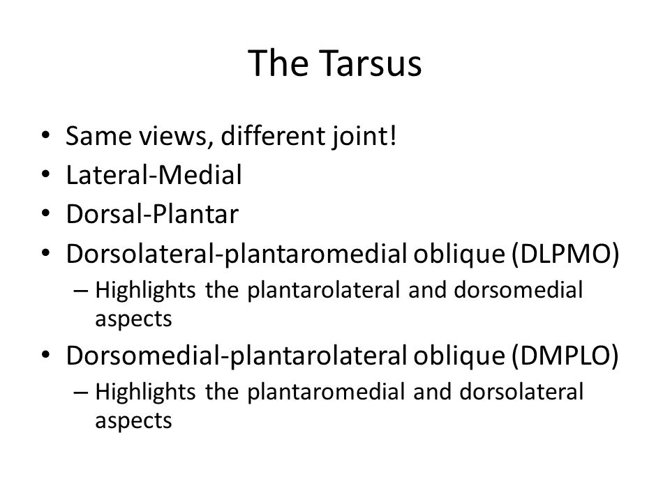 The Tarsus Same views, different joint! Lateral-Medial Dorsal-Plantar
