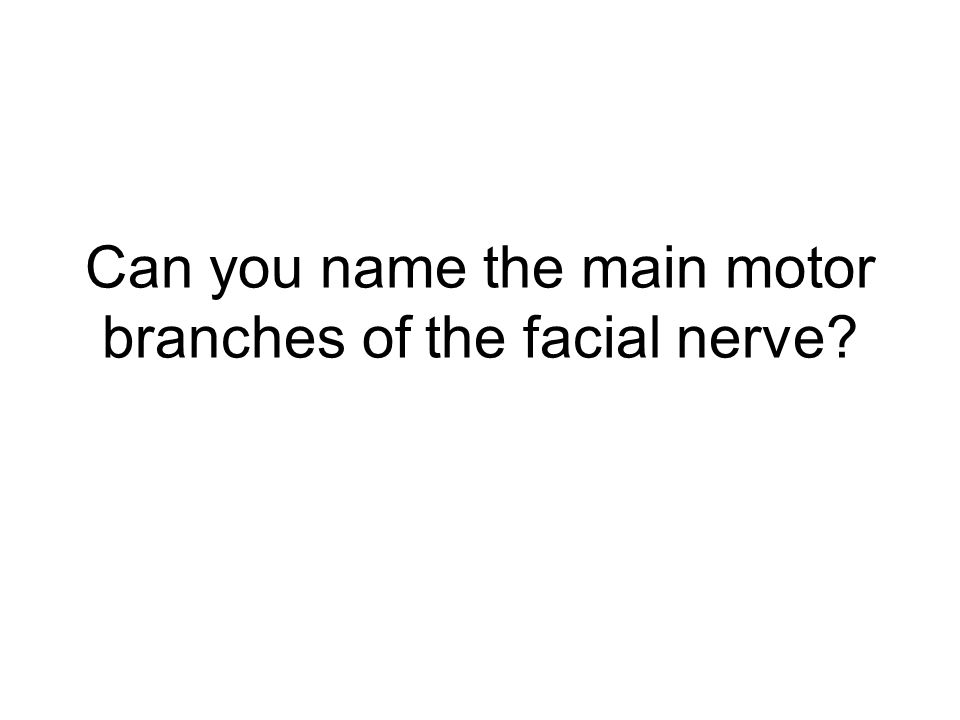 Can you name the main motor branches of the facial nerve