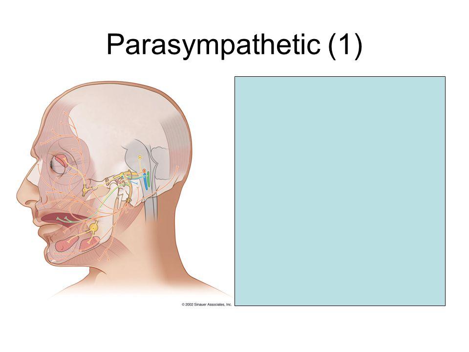 Parasympathetic (1) Superior salivatory nucleus