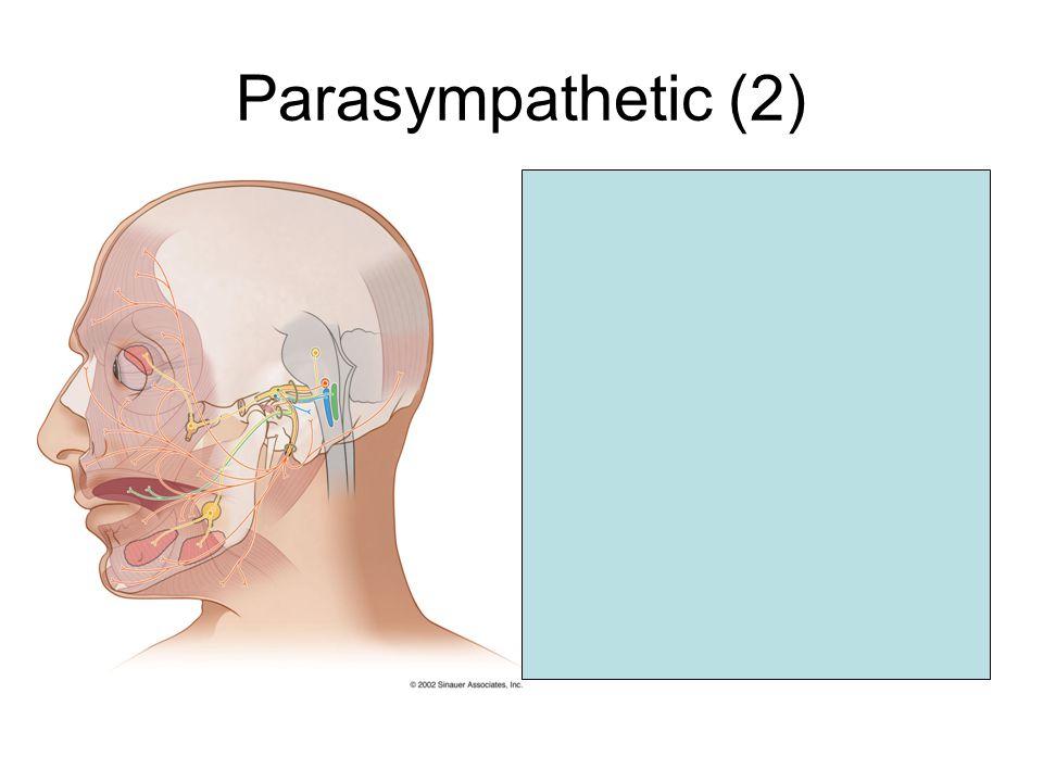 Parasympathetic (2) Superior salivatory nucleus