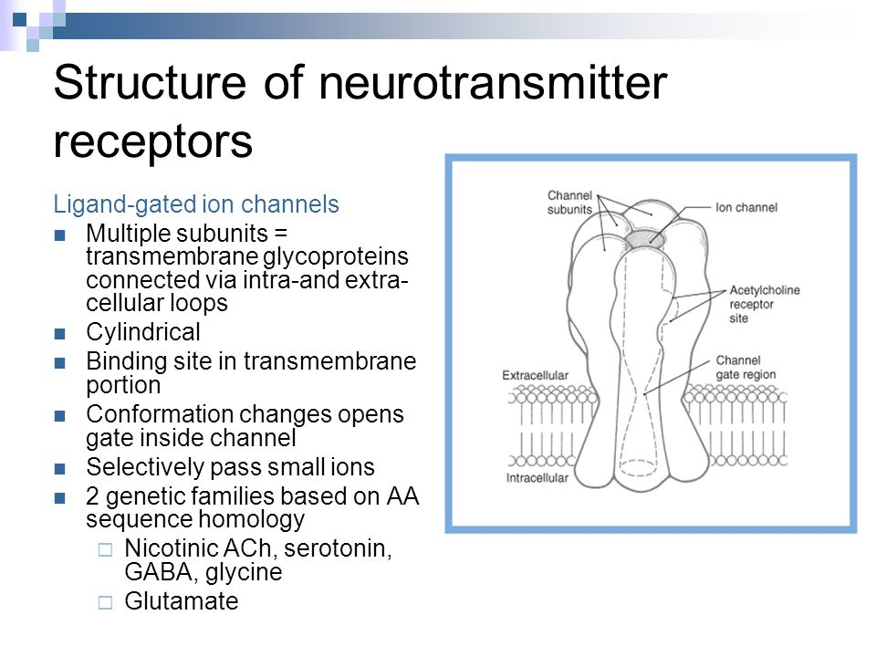 Structure of neurotransmitter receptors