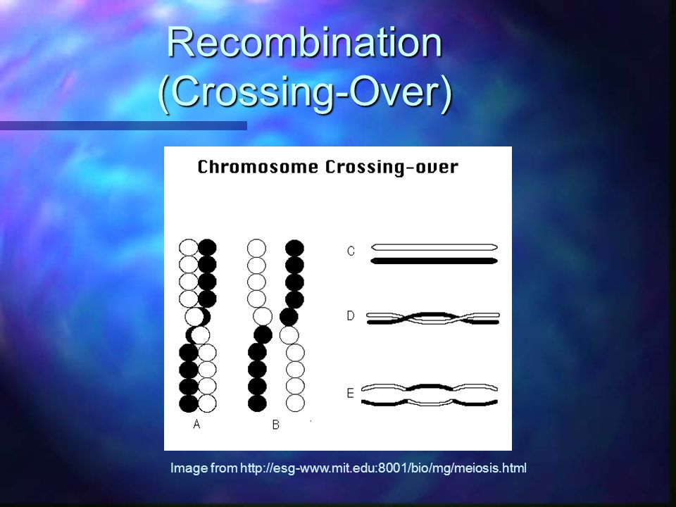 Recombination (Crossing-Over)
