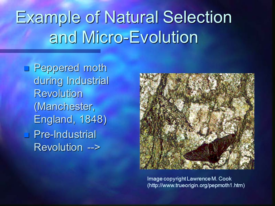 Example of Natural Selection and Micro-Evolution