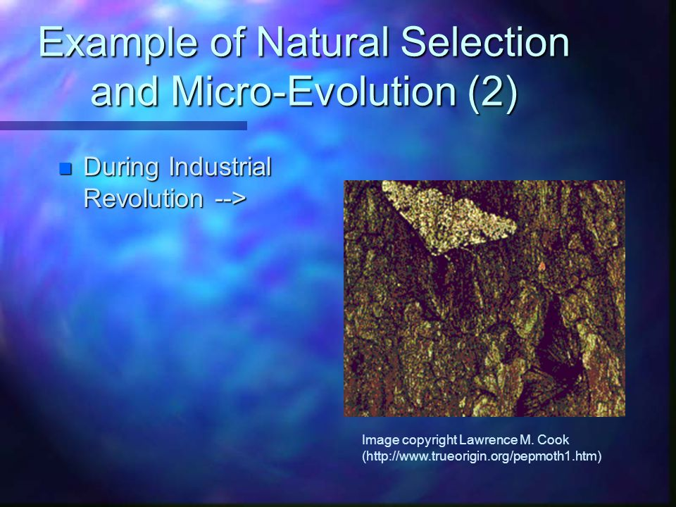 Example of Natural Selection and Micro-Evolution (2)