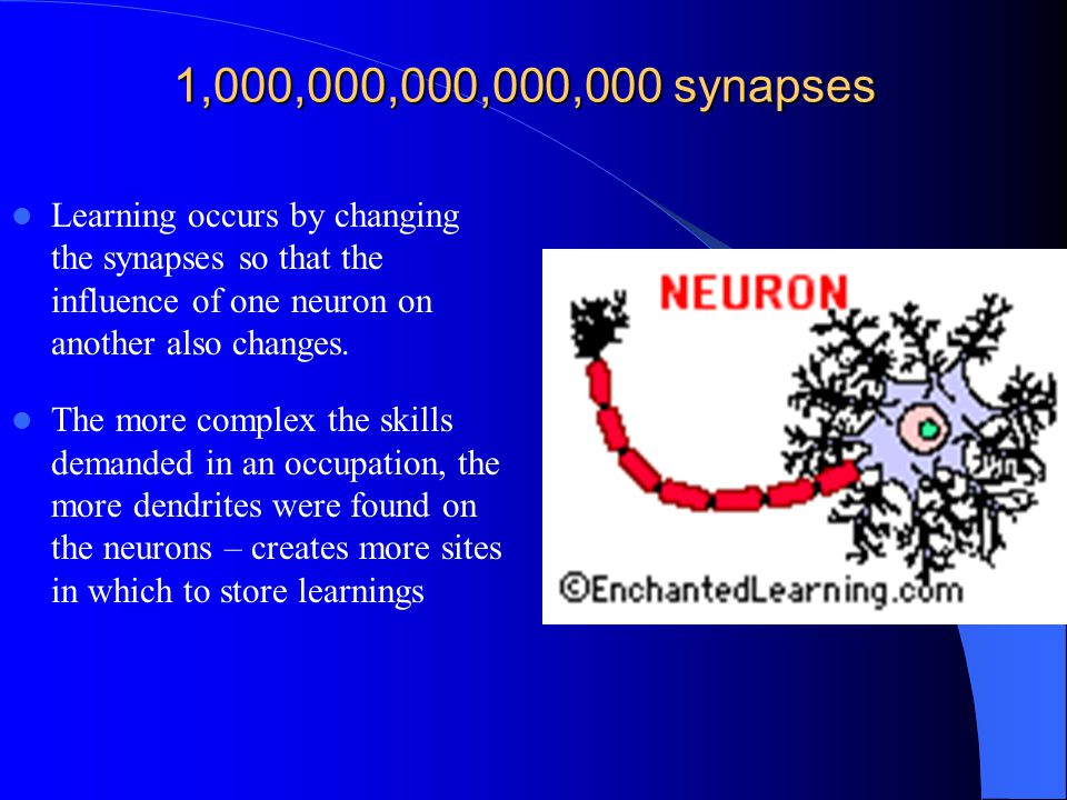 1,000,000,000,000,000 synapses Learning occurs by changing the synapses so that the influence of one neuron on another also changes.