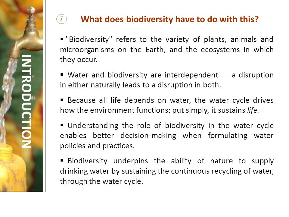 What does biodiversity have to do with this