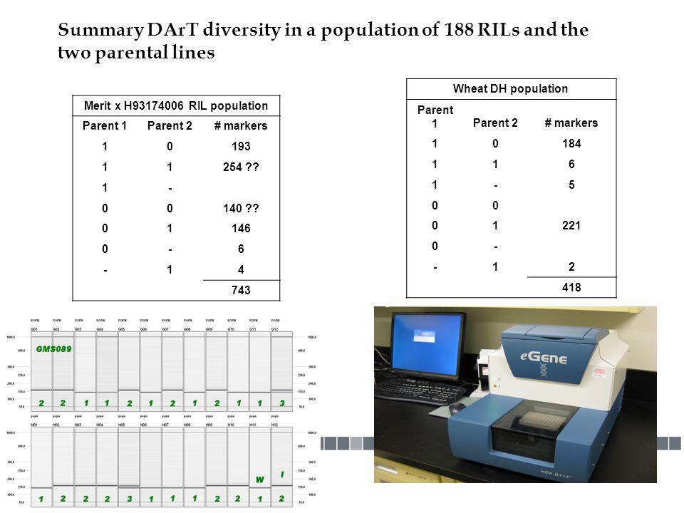 Merit x H93174006 RIL population
