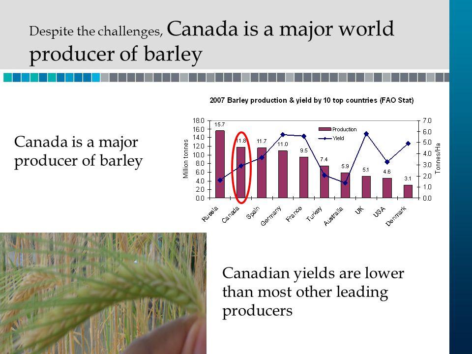 Canada is a major producer of barley