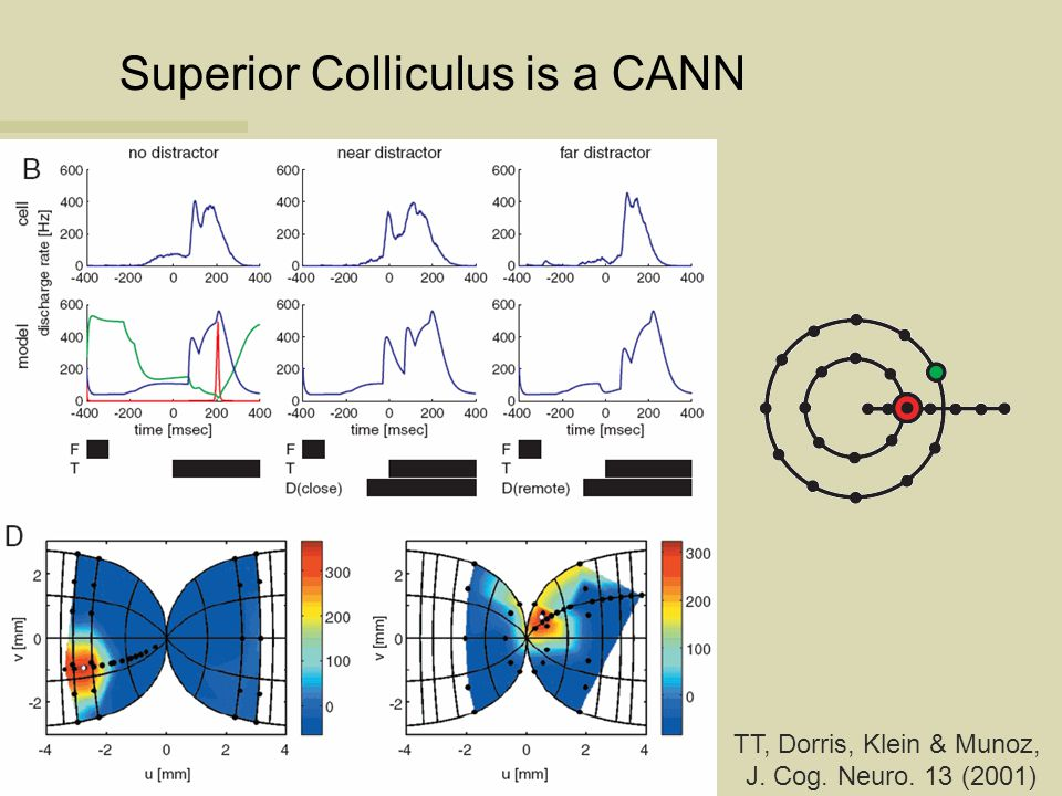 Superior Colliculus is a CANN