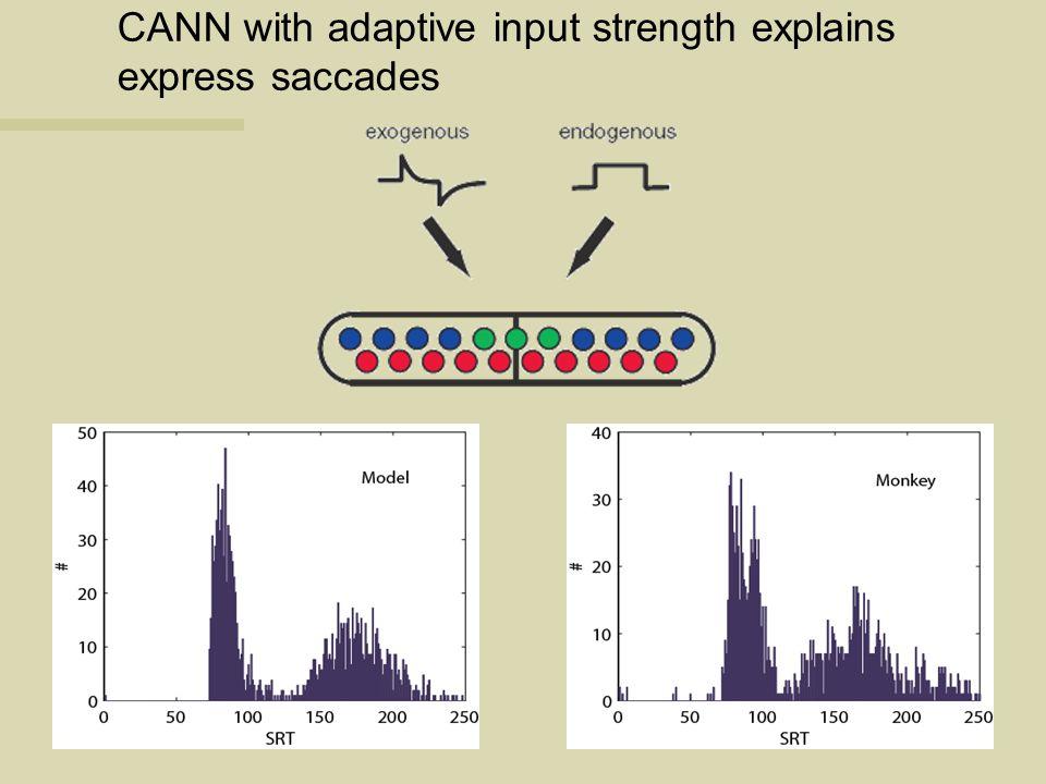 CANN with adaptive input strength explains express saccades